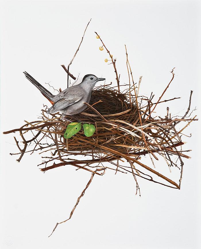 Птичка в гнезде картинка для детей